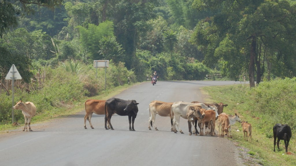 Laos and Cows, Pakse loop