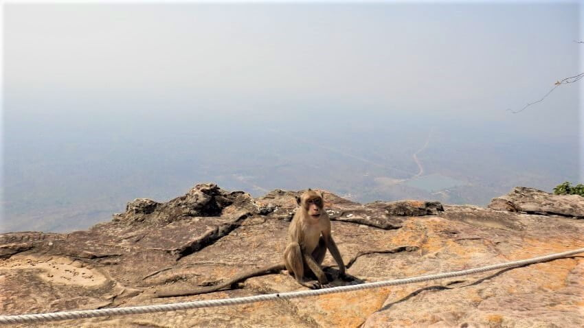 A Monkey at the Dongrek Mountains, Cambodia