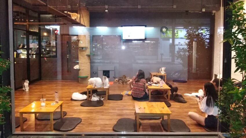 Cat Café in Thailand