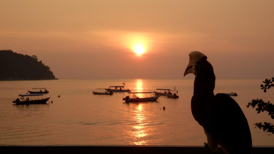 Hornbill in Malaysia