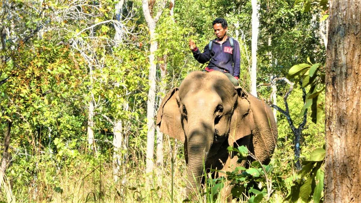 An elephant and its mahout, Cambodia