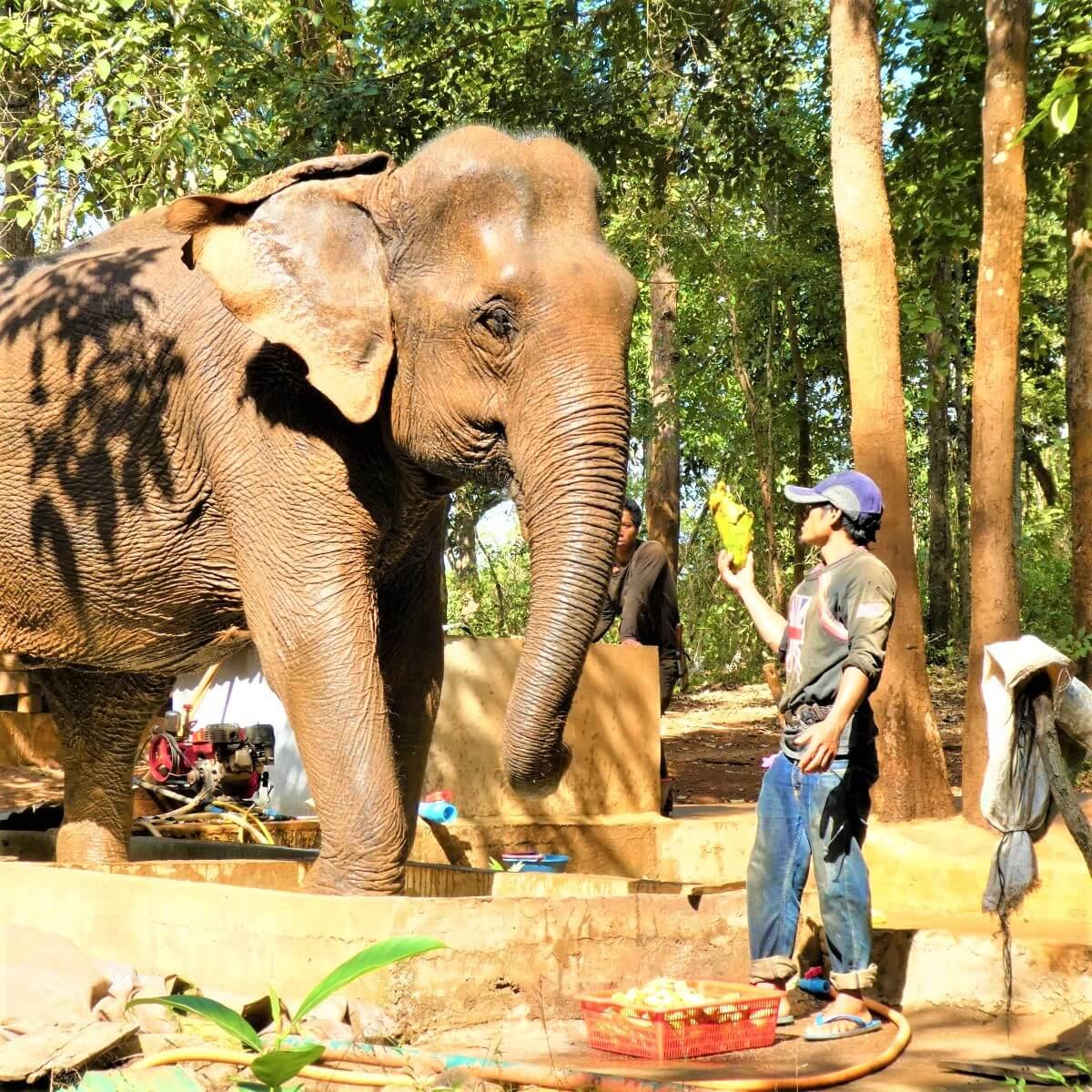 Elephant Sambo at Sen Monorom