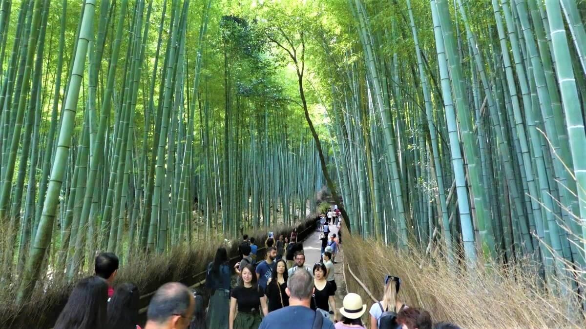 The bamboo forest of Arashiyama west of the city