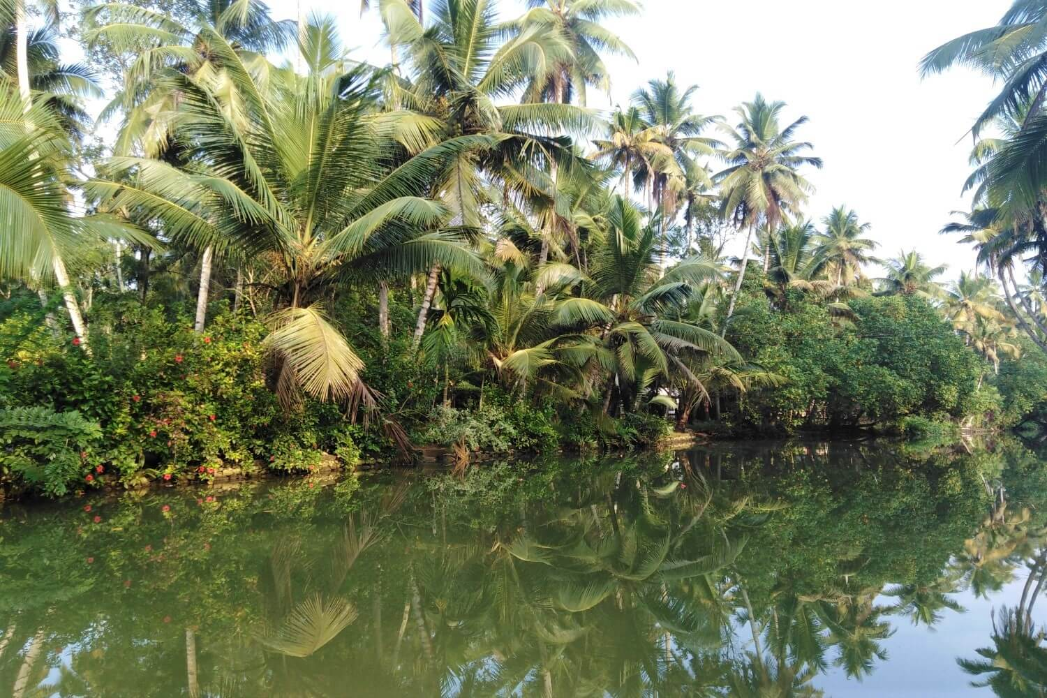 Palm Trees and Water. That's Munroe Island in Kerala
