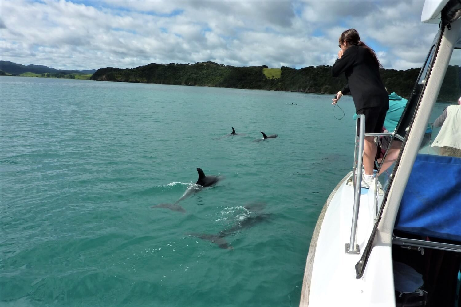 Swimming with dolphins in the Bay of Islands, New Zealand