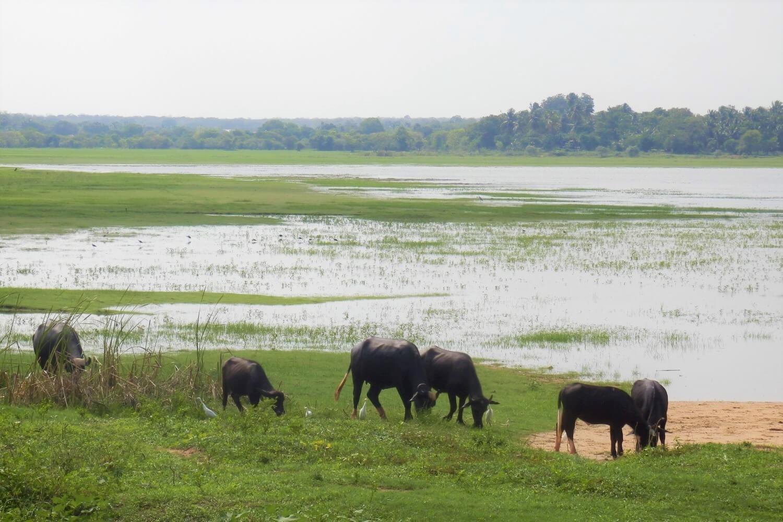 Irrigation lakes around Anuradhapura, Sri Lanka