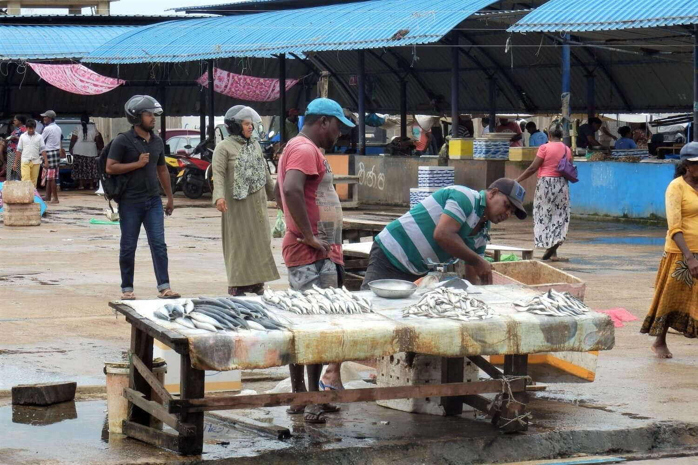 Fishing Market in Negombo, Sri Lanka